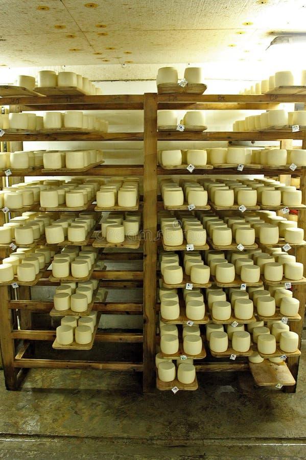 Formaggio delizioso prodotto in Zakarpattya fotografia stock