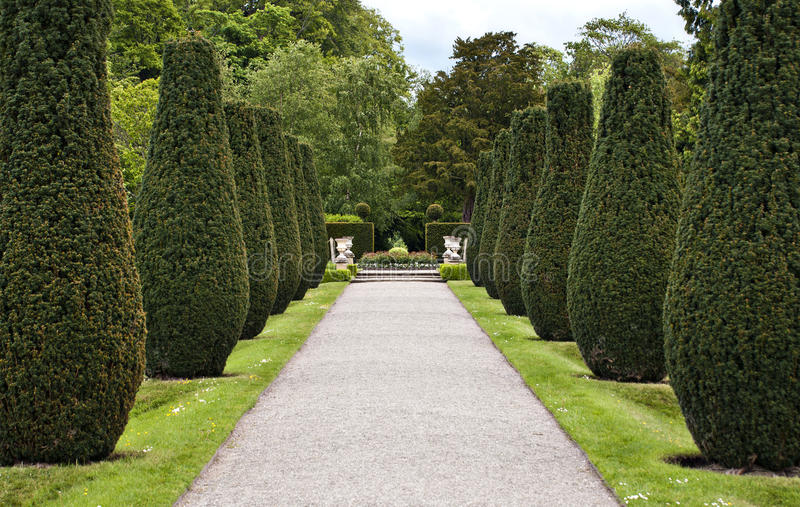 Download Formal avenue stock photo. Image of shrub, horticulture - 19555870