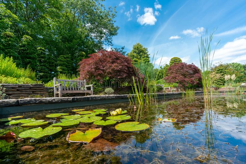 Formal garden pond with water lilies and a park bench. Formal rectangular walled garden pond with water lilies and lily pads and a park bench and red acer in the stock images