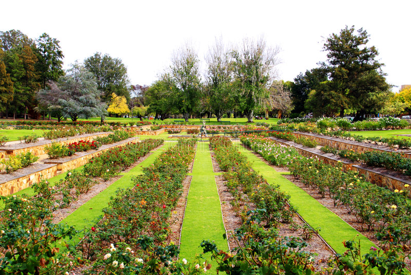 Formal Rose Garden, Adelaide, Australia. Formal Rose Garden - Veale Gardens, Adelaide, Australia stock photos