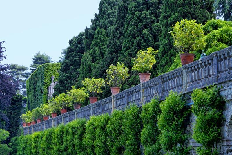 Formaler Garten mit Zitronenbäumen in den Töpfen stockbild