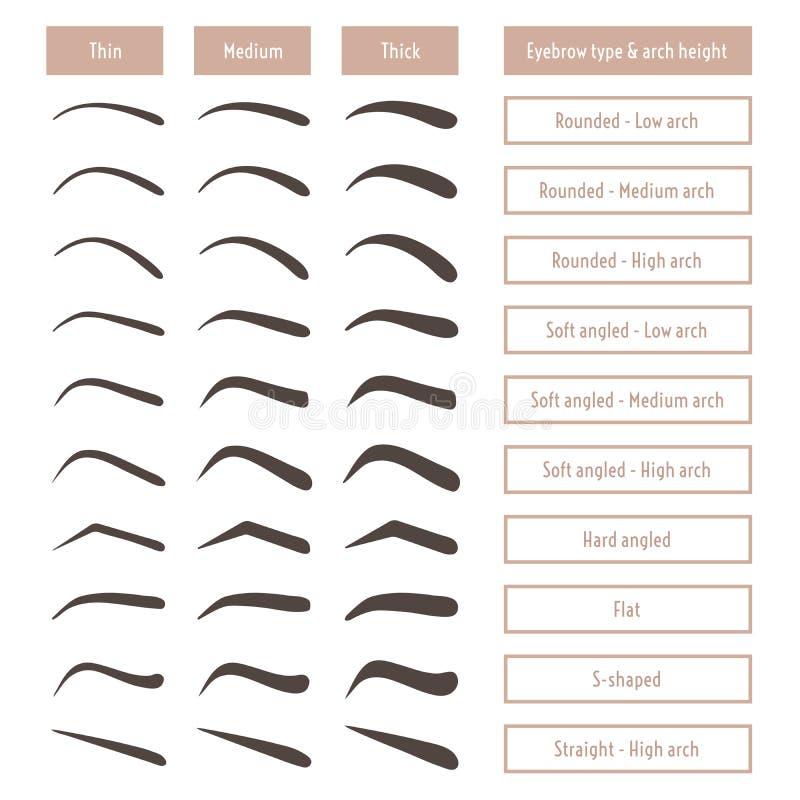 Formas da sobrancelha Vários tipos da testa Tabela de vetor com sobrancelhas e subtítulos ilustração do vetor