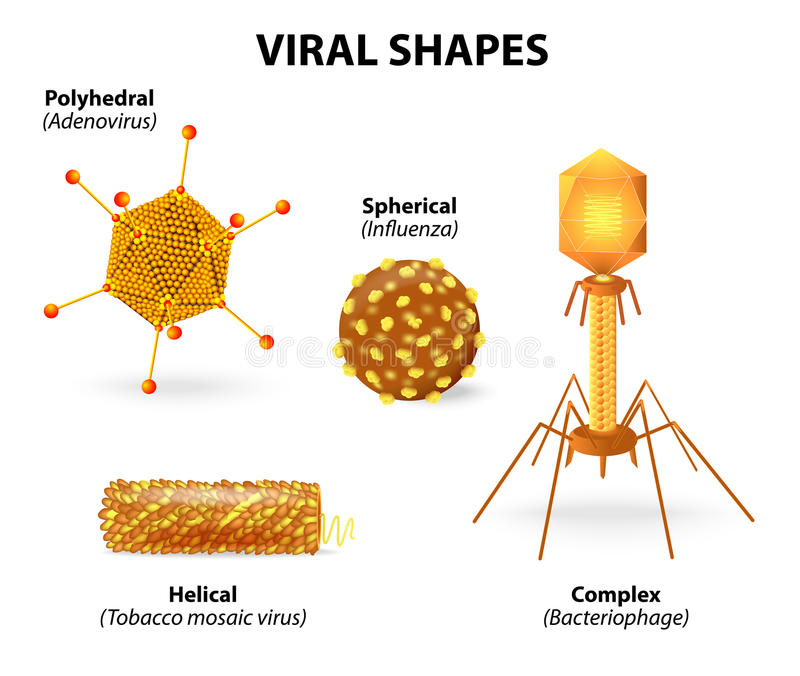 Formas de virus stock de ilustración