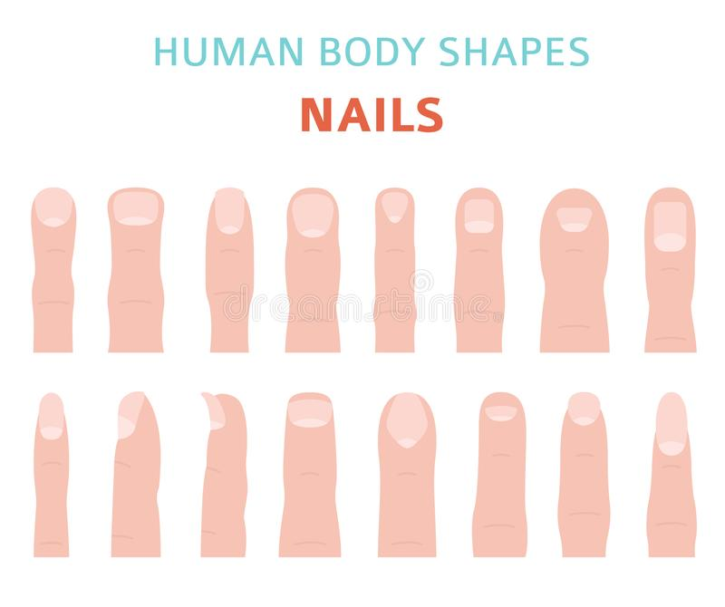 Formas del cuerpo humano Tipos del clavo del finger de la mano fijados ilustración del vector