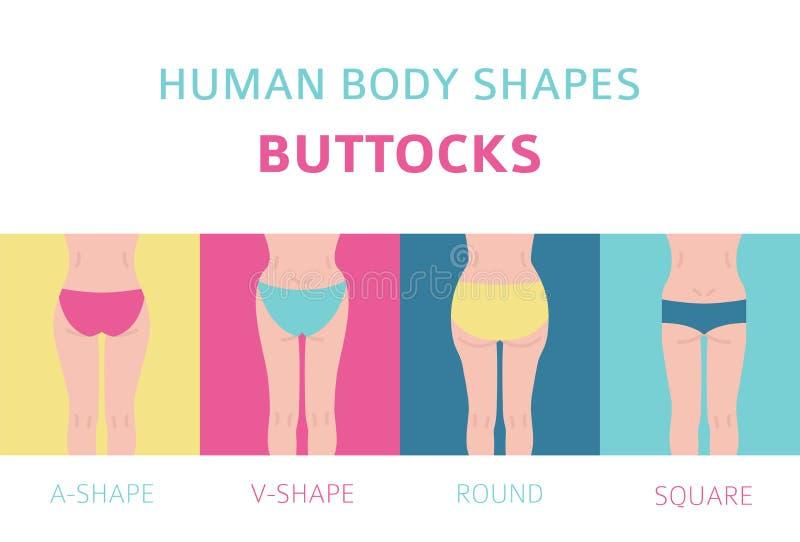 Formas del cuerpo humano Tipos de las nalgas de la mujer fijados stock de ilustración
