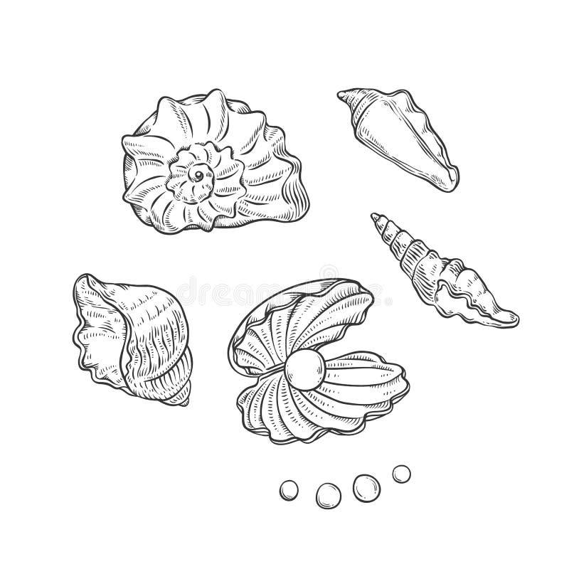 Formas diferentes ajustadas dos shell e das pérolas do mar do vetor Ilustração preta monocromática do esboço do esboço das partes ilustração stock