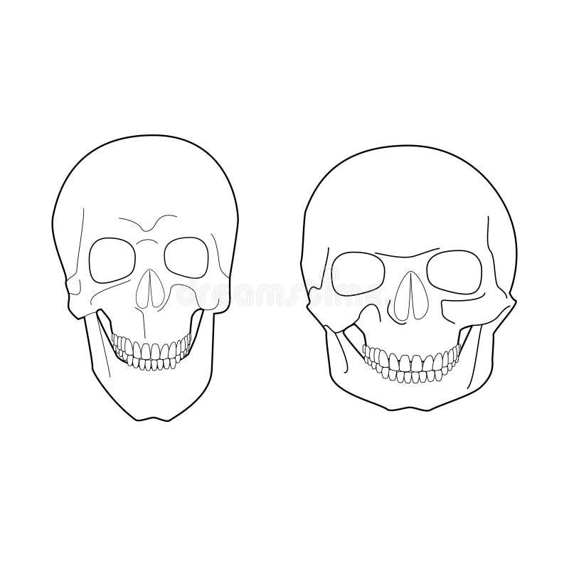 Formas Extremas Del Cráneo Humano Ilustración del Vector ...