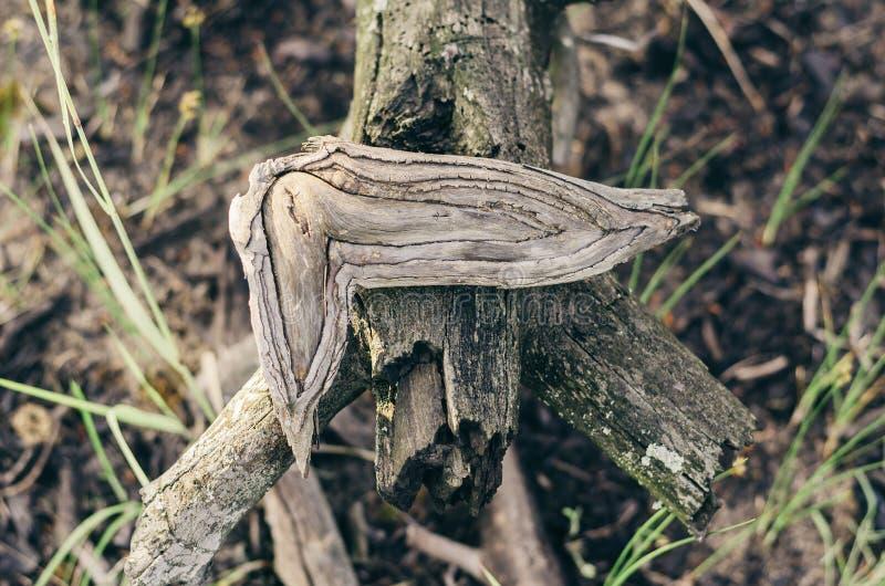 formas y ornamentos Naturaleza-creados de la madera Luz suave imagen de archivo libre de regalías