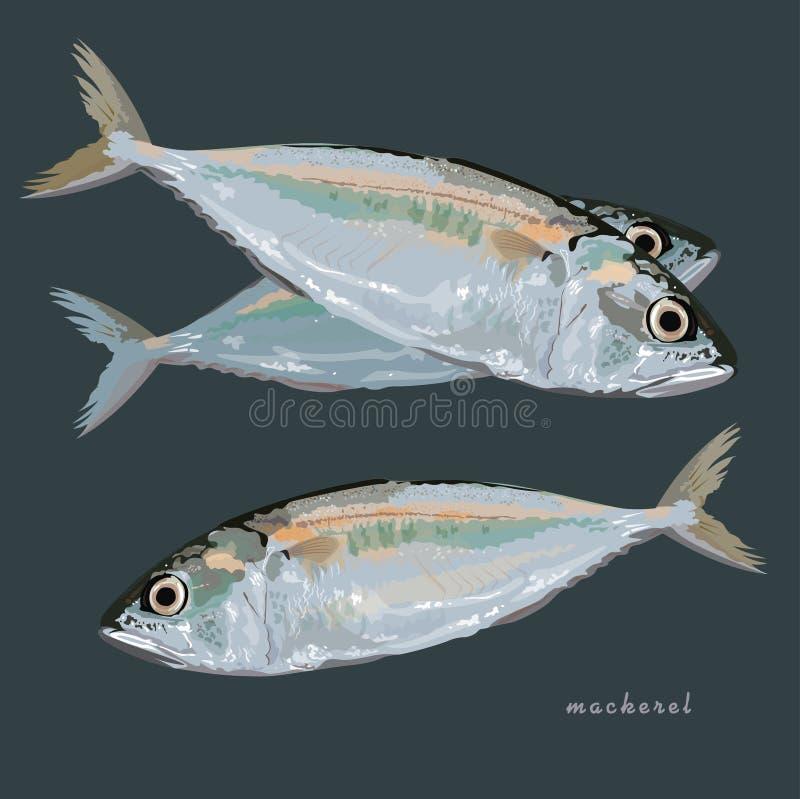 Format des Makrelenfisch-Vektors ENV 10 vektor abbildung