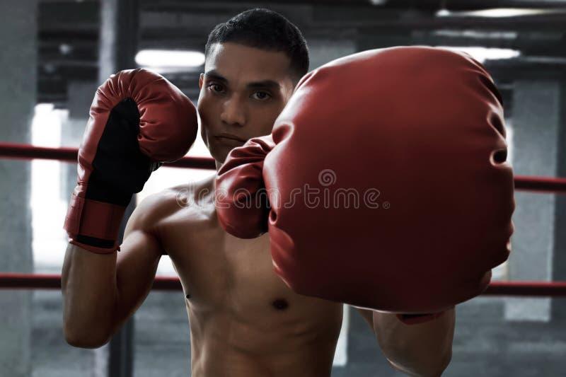 Formation d'athlète de boxeur dans le gymnase image stock
