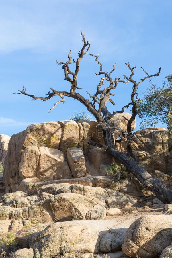 Formation de bois mort et de roche en Joshua Tree National Park, Califo photos stock