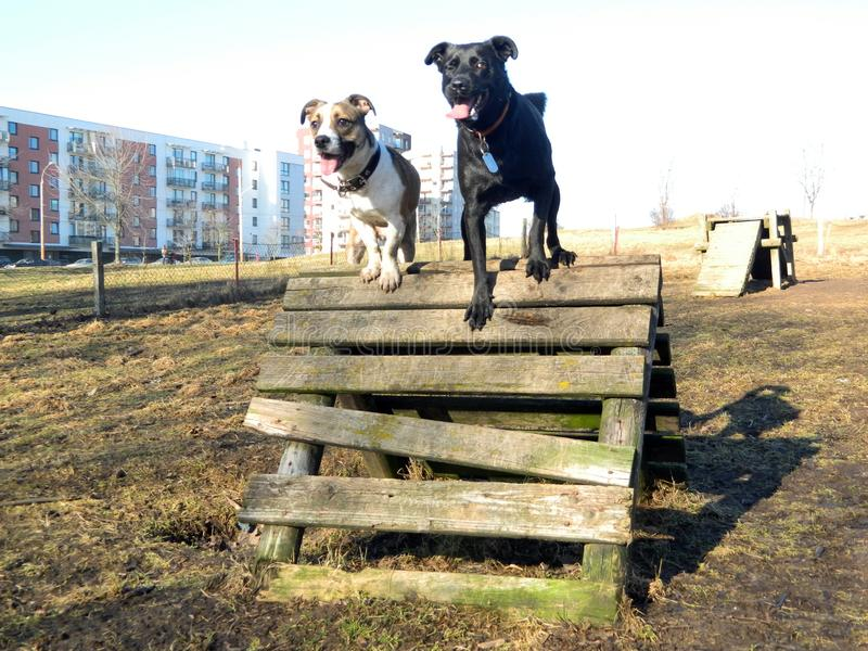 Formation de deux chiens images libres de droits