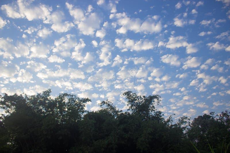 Formation de nuage dans le ciel bleu et les arbres photos libres de droits