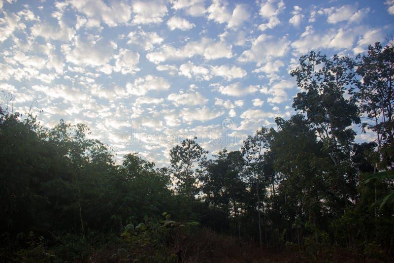 Formation de nuage dans le ciel bleu et les arbres photo stock