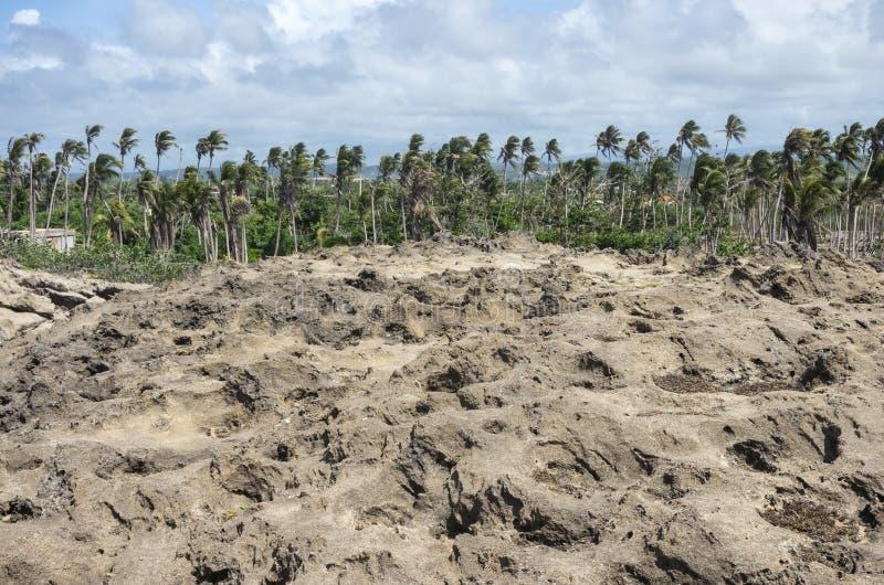 Formation de roche et régions boisées côtières près d'Arecibo photographie stock libre de droits
