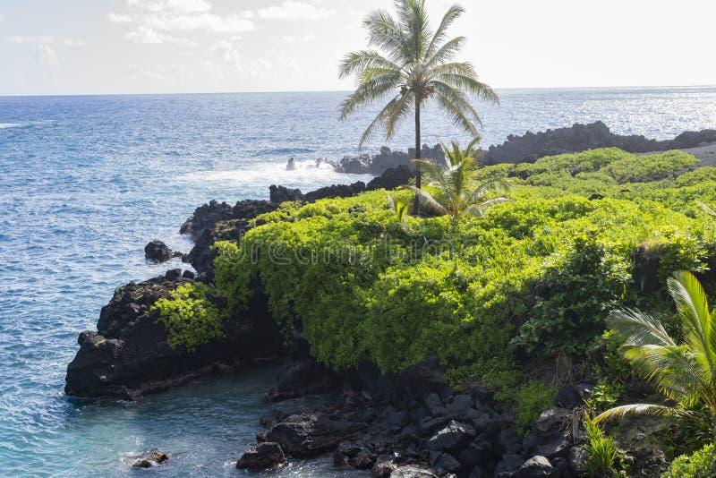 Formation de roche volcanique noire et verdure en Hawaï photos libres de droits