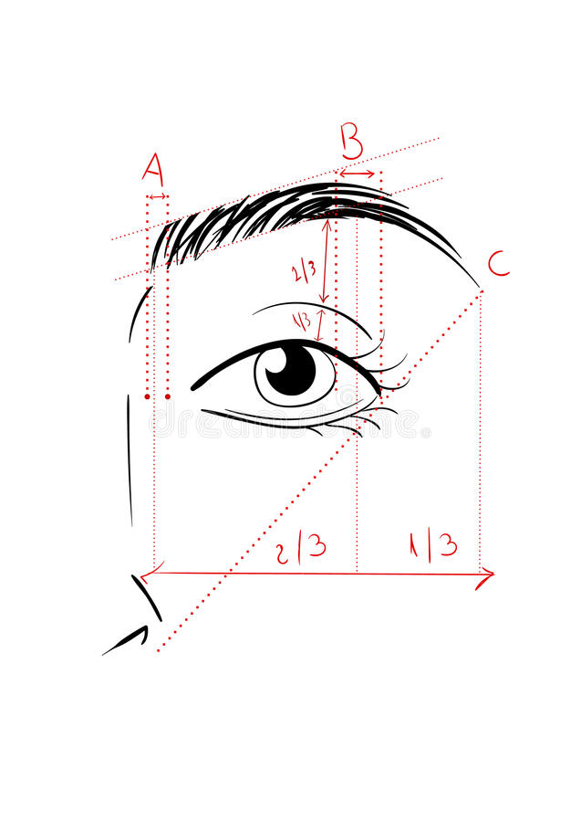 Formation des sourcils illustration de vecteur
