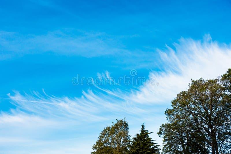 Formation peu commune, de nuage avec Chemtrails, Contrails et arbres images libres de droits