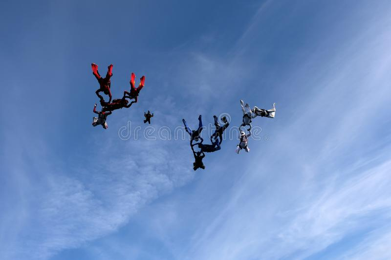 Formation skydiving in the sunset sky. Skydiving. A group of skydivers is falling in the sky royalty free stock photos