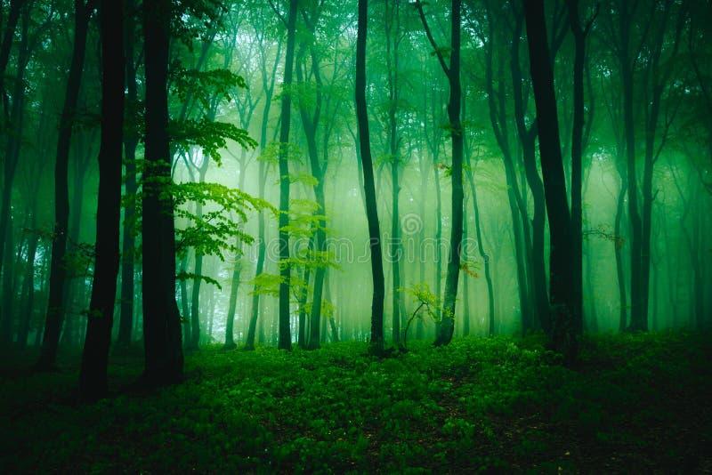 Formations étranges de brouillard dans la forêt photographie stock libre de droits