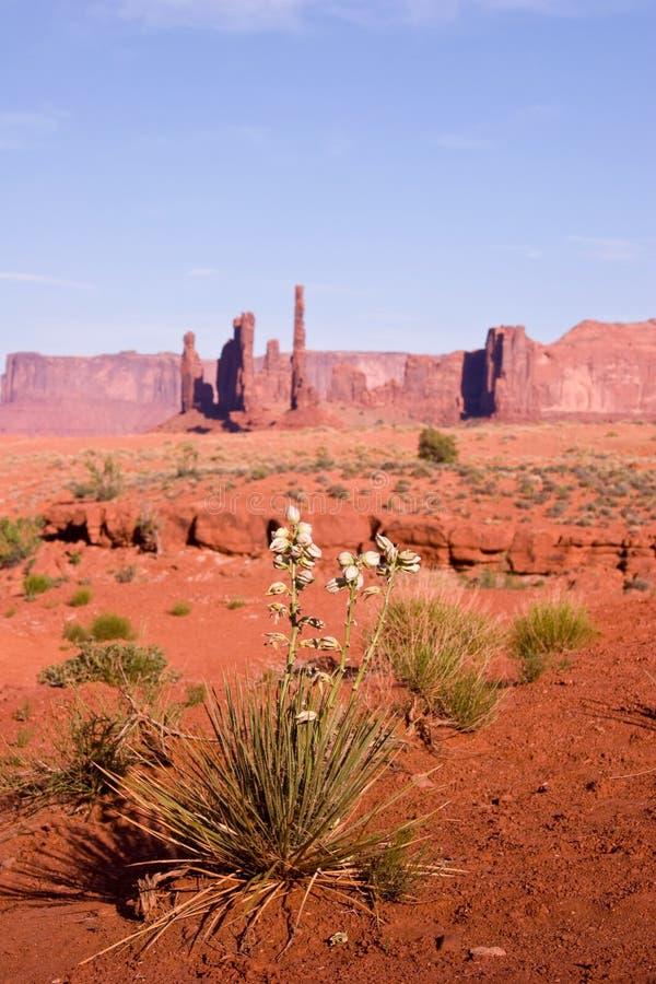 Formations de floraison et de roche de yucca à la vallée de monument photographie stock