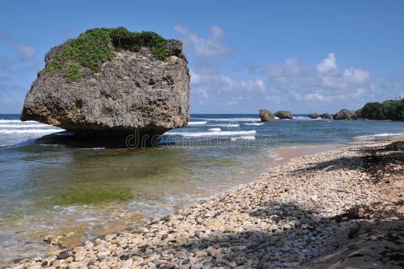 Formations de roche atlantiques chez Bathsheba Beach Barbados photos libres de droits