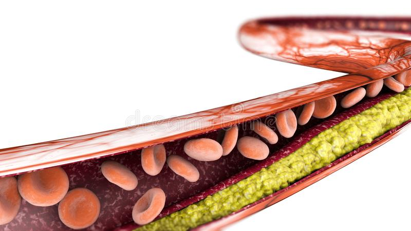 Formazione del colesterolo, grassa sezione 3d di un'arteria, di una vena e dei globuli rossi, cuore illustrazione vettoriale