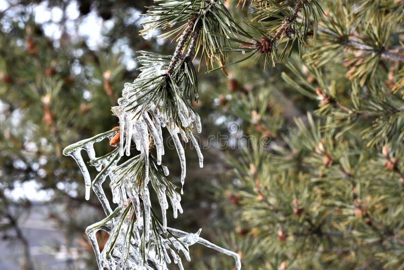 Formazione sconosciuta del ghiacciolo immagini stock libere da diritti