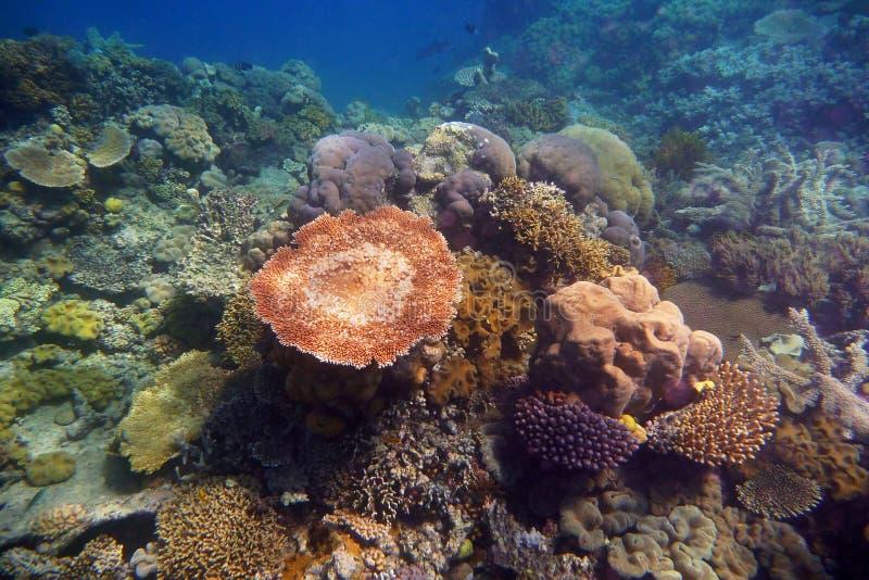 Formazioni coralline, The Great Barrier Reef, Queensland, Australia fotografia stock libera da diritti