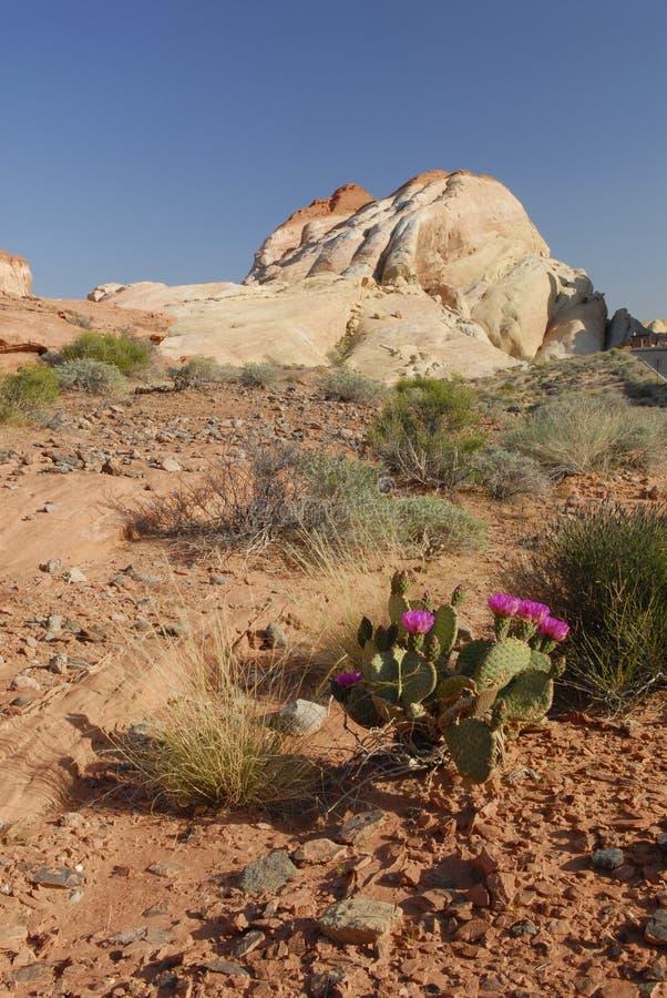 Formazioni dell'arenaria in valle di fuoco, Nevada fotografia stock