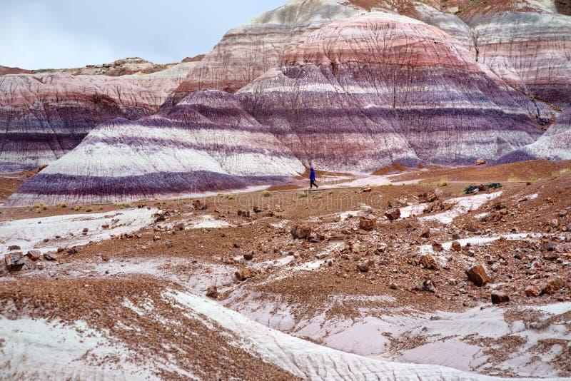 Formazioni porpora a strisce sbalorditive dell'arenaria di calanchi blu di MESA in Forest National Park petrificato fotografie stock libere da diritti