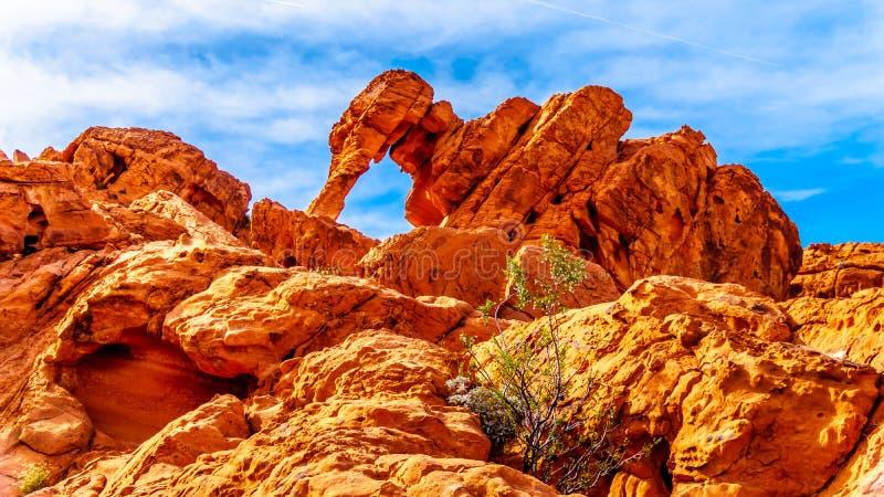 Formazioni rocciose dell'elefante nella valle del parco di stato del fuoco nel Nevada, U.S.A. fotografie stock