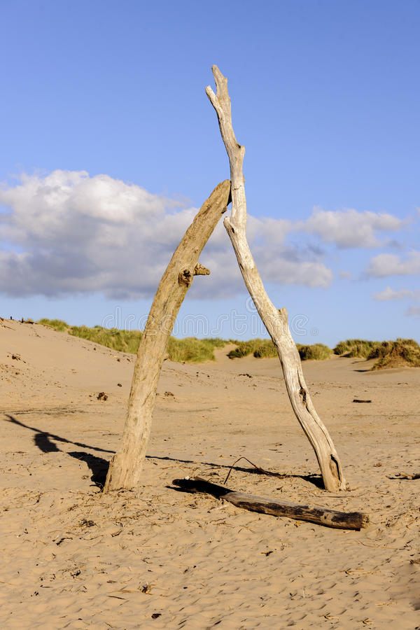Formby stock images