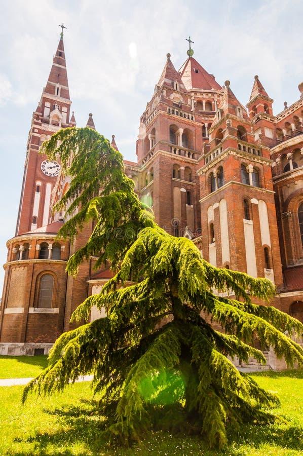 Forme émotive de l'arbre à feuilles persistantes de conifère s'élevant près de l'église votive L'église et la cathédrale votives  photographie stock libre de droits