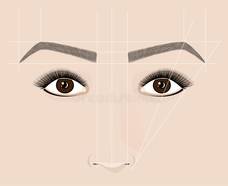 Forme classique des sourcils Microblaining et maquillage permanent Le plan de la construction correcte illustration stock
