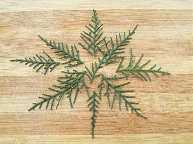 Forme d'étoile de feuille de cyprès de cèdre sur le fond en bois photo stock