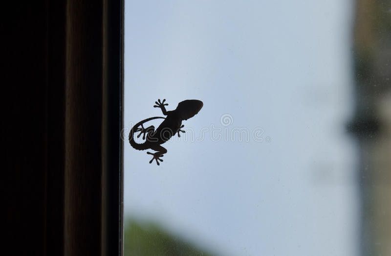 Forme d'un petit gecko photos stock