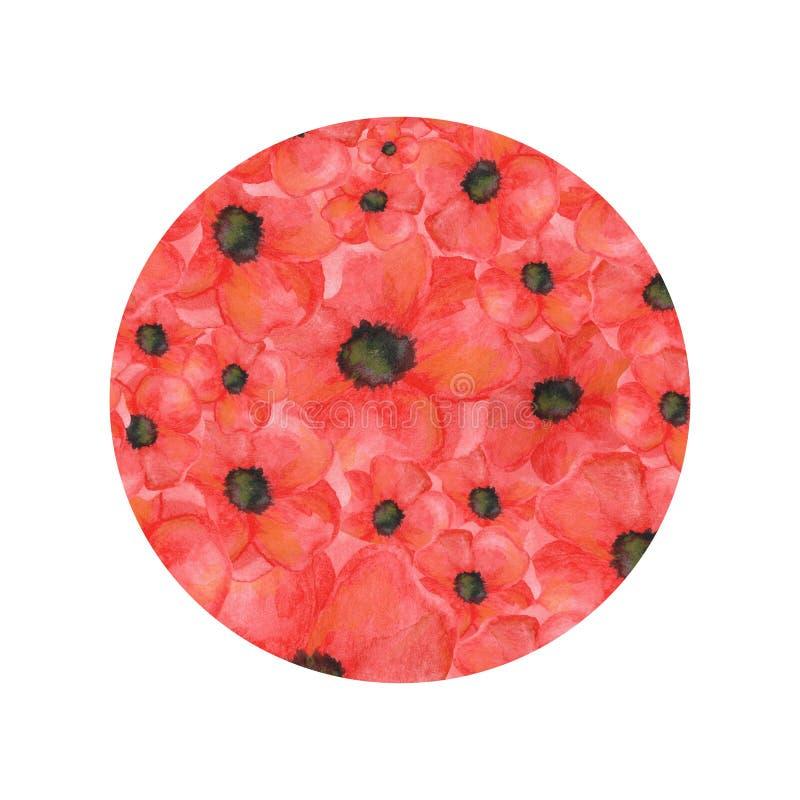 Forme de cercle des pavots sur le fond blanc aquarelle tirée par la main botanique illustration stock