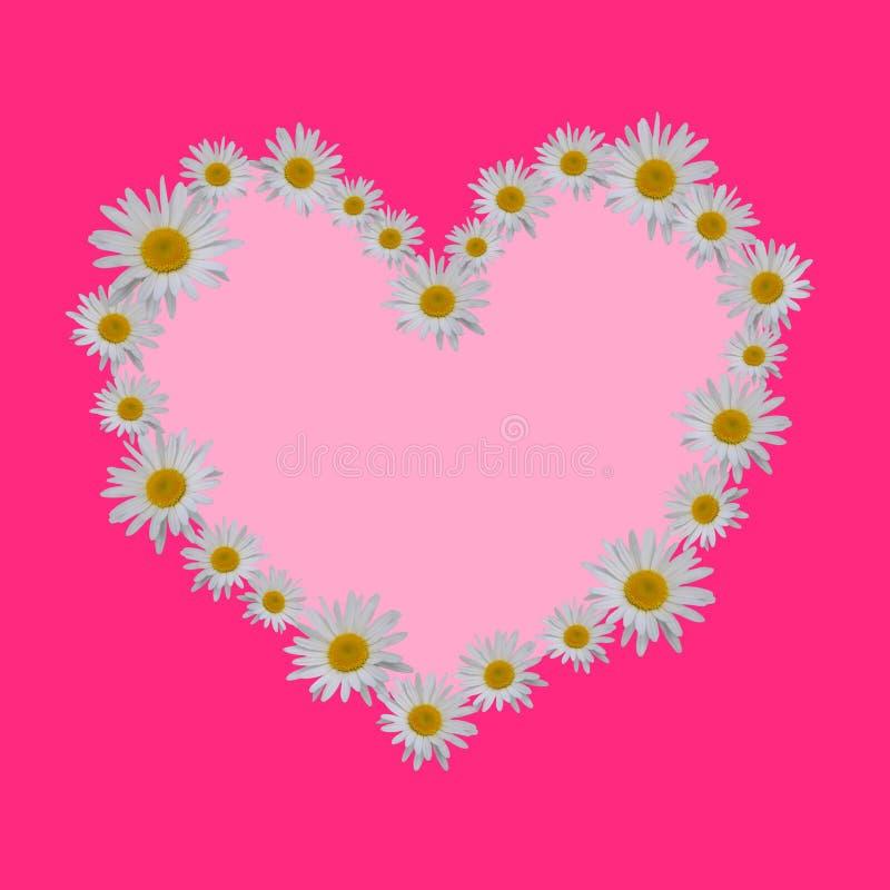 Forme de coeur avec des marguerites avec le fond rose illustration stock