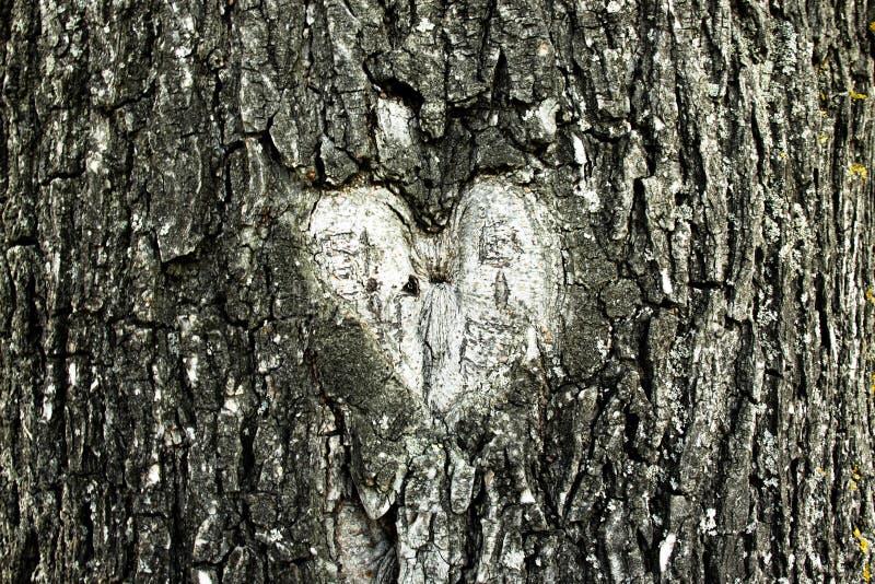 Forme de coeur dans une écorce d'arbre images libres de droits