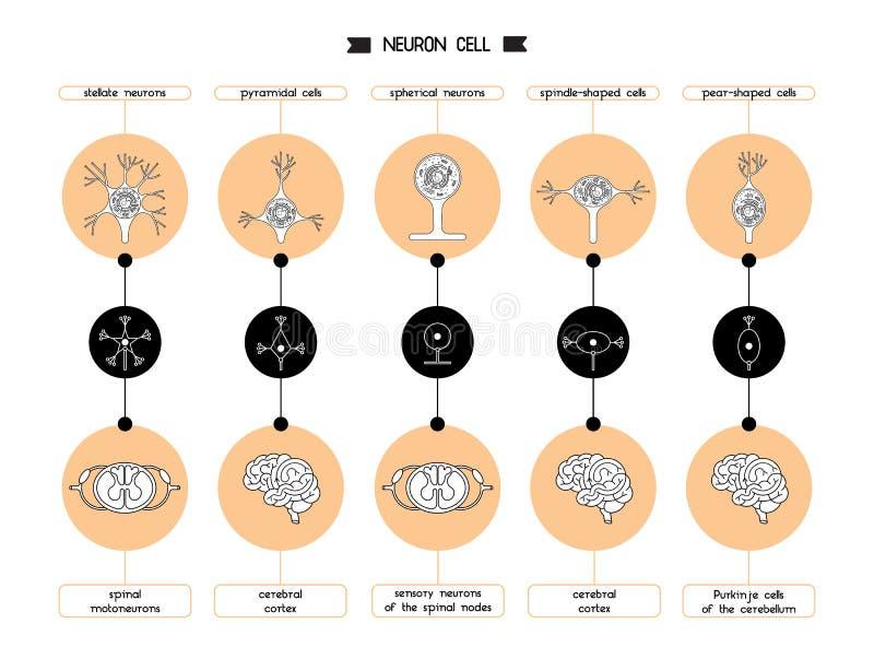 Forme de corps cellulaire de neurone illustration libre de droits