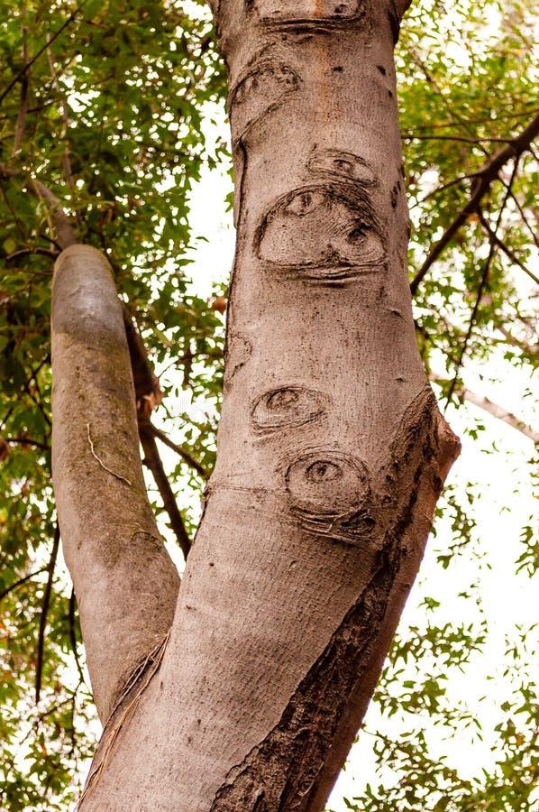 Forme e modelli interessanti sul tronco di albero crescente fotografie stock libere da diritti