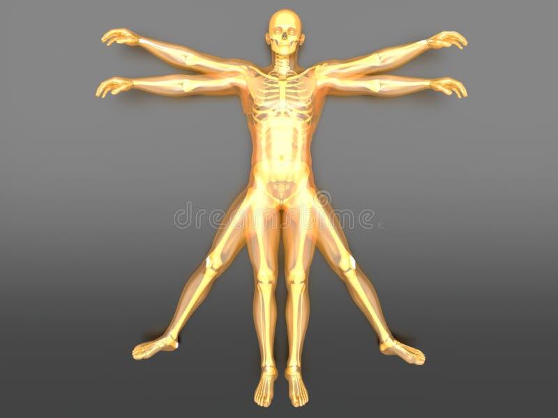 Forme humaine illustration stock