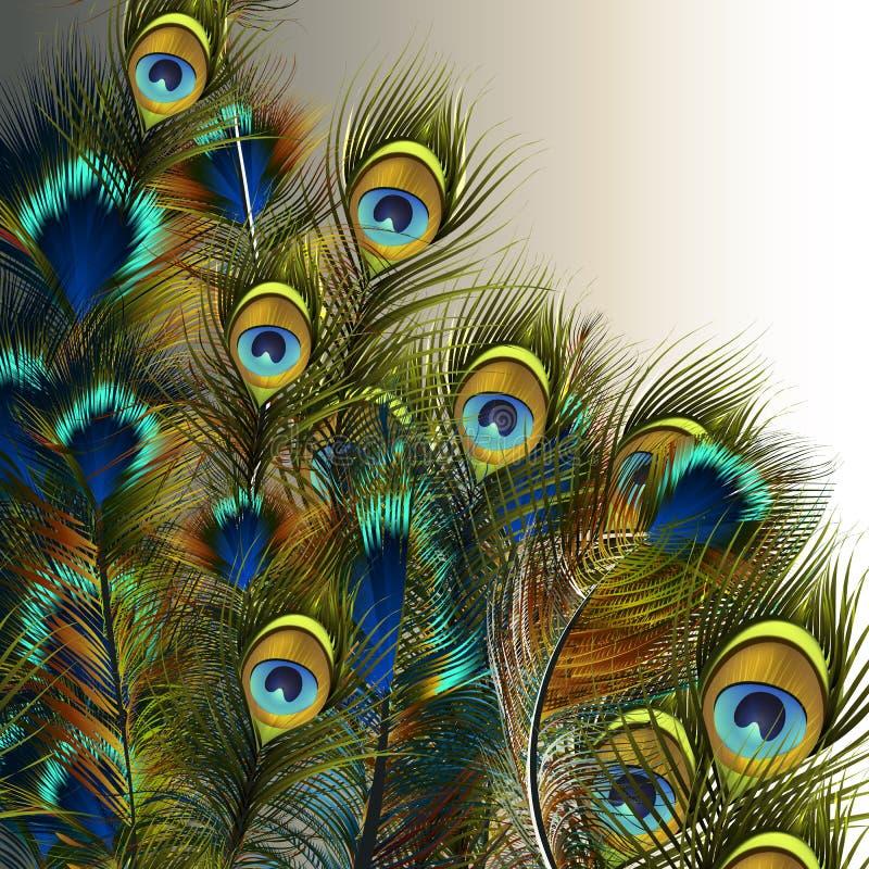 Forme a ilustração das penas do pavão do vetor em c azul e verde ilustração do vetor