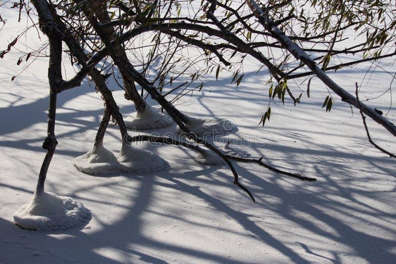 Forme interessanti della zampa dell'albero di inverno immagini stock