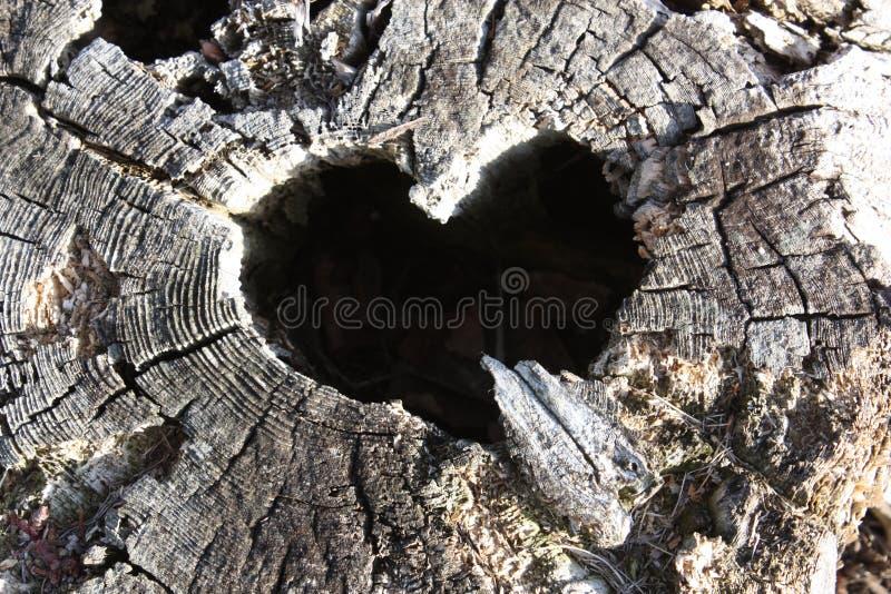 Forme naturelle de coeur dans le tronçon images libres de droits