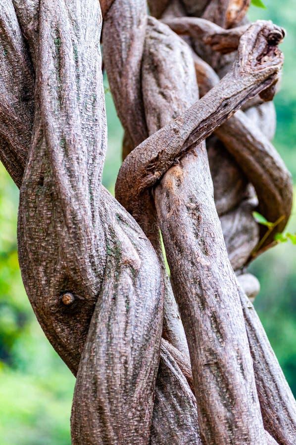 Forme torte interessanti, modelli dei rami di albero crescenti fotografie stock libere da diritti