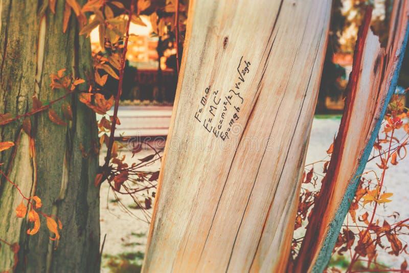 Formel för fysik för massenergimotsvarighet som är skriftlig på den wood stammen för träd, hand som dras, klotter, höstnedgångsäs royaltyfria bilder