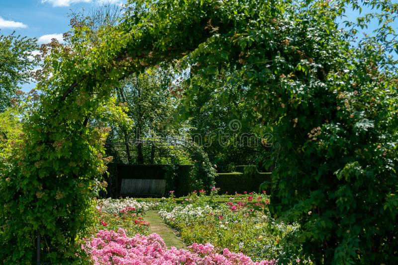 Formell rosarium med klippte buskar royaltyfri fotografi
