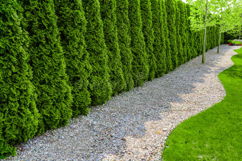 Formell trädgård med en bana av den liten stenar, häcken och gräsplangräsmatta royaltyfria bilder
